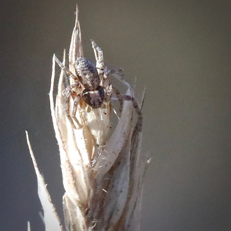 Itsy-bitsy spider